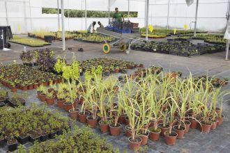 CERCICA garden