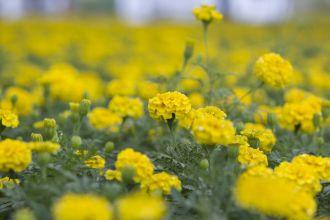 Flowers in Cercica's garden