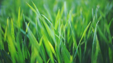 <p>Sustainable packaging made of… grass</p>