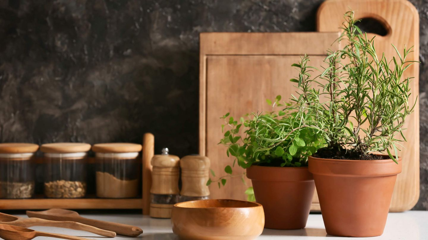 Create your own sustainable herb garden at home