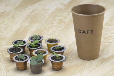 Cápsulas de café para germinar plantas