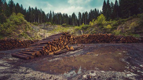 O problema da desflorestação em zonas tropicais