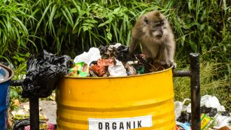 Deforestation Rain Forest - Monkey searching for food in trash can