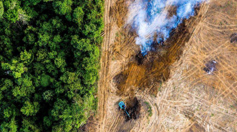 Deforestation Rain Forest