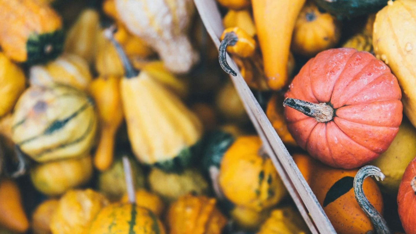 Squash : from the Americas to our plates