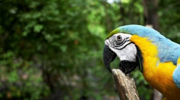 Fazer a nossa parte, pela biodiversidade