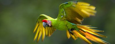 The Jerónimo Martins Group and ProAves have created the Macaw Protection Project in 2019