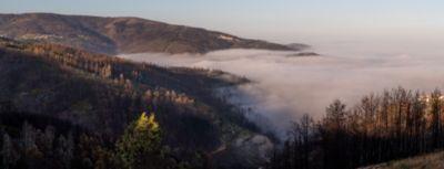 Reforestation of Serra do Açor, ravaged by the 2017 forest fires