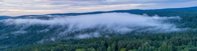 A Biedronka estabeleceu um protocolo com a Fundação Arka para plantar 10 mil árvores na região de Beskid Niski