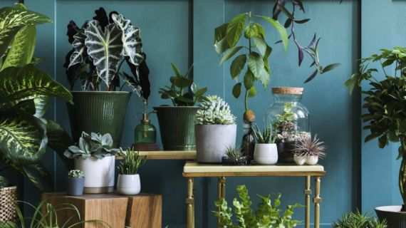 Air-filtering plants that clean the air