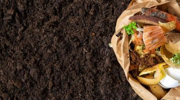 Guide to start composting at home