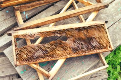 Beehives destroyed and without honey