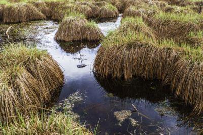 Turfeira (ecossistema aquático)